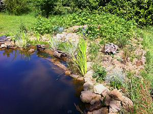 pond bank