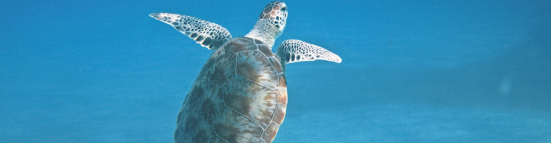 nusa lembongan snorkeling turtle meeting