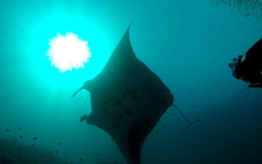 Day 19: Learning About Advanced Manta Research with Conservation International