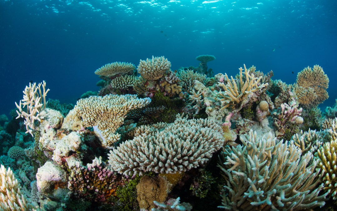 Day 17: How to Protect Our Oceans?