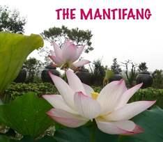 [:en]Mantifang: always in full bloom[:]
