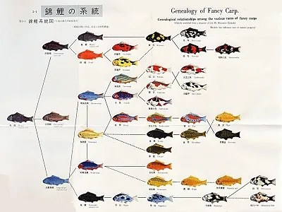 genealogy of fancy carp