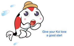 Give a good Koi start