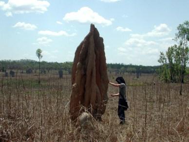 Gavin termite