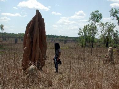 Gavin termite2
