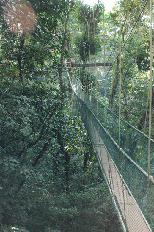 Mulu Canopy Walk2