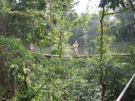 Mulu Canopy Walk3