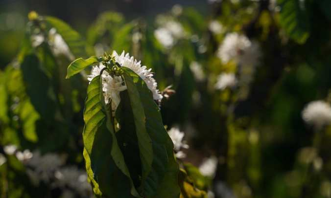Coffee from Vietnam with Honey Bees