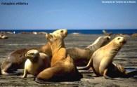 Vida marinha na Terra do Fogo