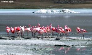 Flamingos, Salar de Uyuni, Bolívia