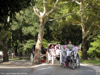 Passeios de carruagem no Central Park, Nova York, foto Barão