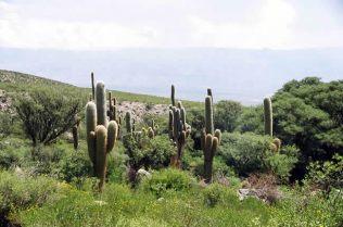 Quebrada de Cafayate, NOA