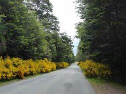 Ruta de los Siete Lagos, estrada