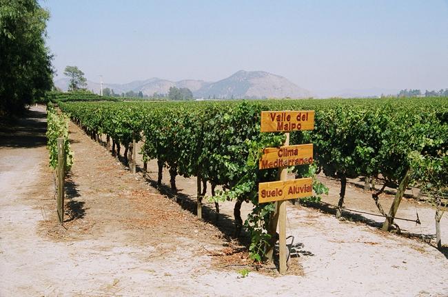 Vinícola perto de Santiago - Foto Manual do Turista, Chile