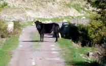 Franç,a Córsega, surpresa na estrada