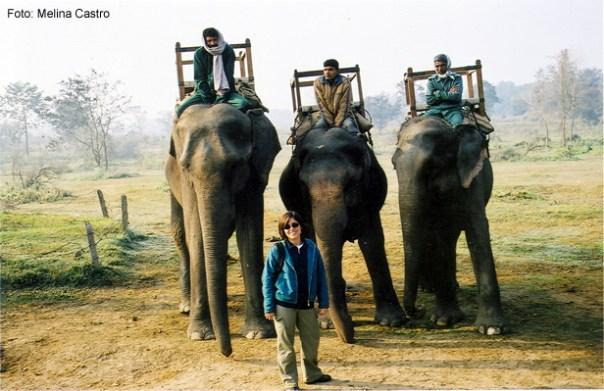 Chitwan National Park, safari de elefante
