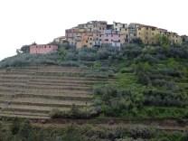 Plantações de vinhas em terraço em Cinque Terre, Riviera Italiana