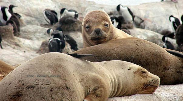 Fauna marinha, Patagônia Atlântica jpg
