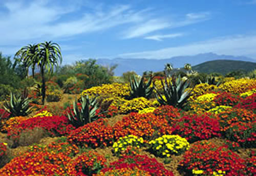 Karoo, Africa do Sul