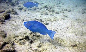 Peixes coloridos Aruba