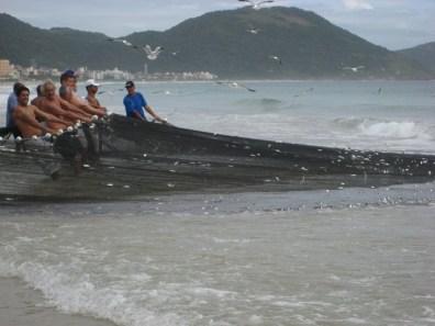 Pescadores na Praia dos Ingleses, em Florianópolis