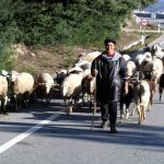 Portugal, um país relativamente barato. Pastor de ovelhas, Serra da Estrela