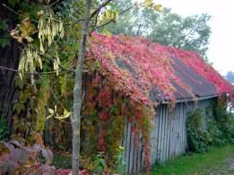 Região rural da Lituânia no outono