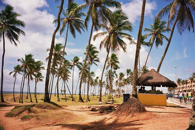 Coqueiral em Salvador, Bahia