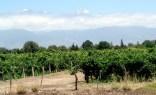 Vinícola próxima a Mendoza, na Argentina