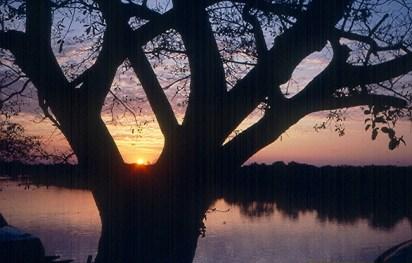 Mato Grosso, Pantanal