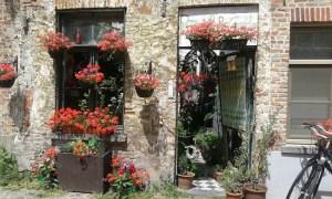 Bruges florida na primavera