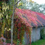 Região rural no outono, Lituânia