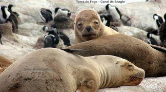 Fauna marinha na Terra do Fogo, Argentina