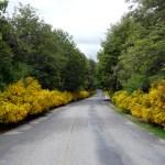 Patagônia, estrada na primavera