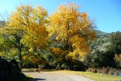 Córsega - de Cavi a St-Laurent, as cores do outono,
