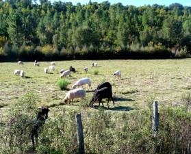 Córsega - de Cavi a St-Laurent, fazenda