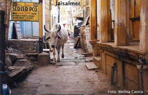 Jaisalmer, vaca perambula na rua em liberdade