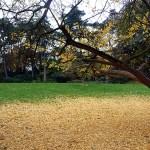Jardin de Montsouris