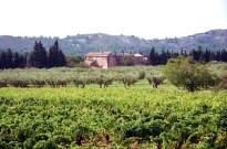 França, Provence, vinhedo