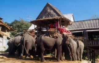 Tailândia, safari de elefante