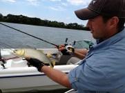 Pesca no rio Paraná, os peixes miudos