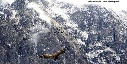 Condor no valle del Colca, Peru