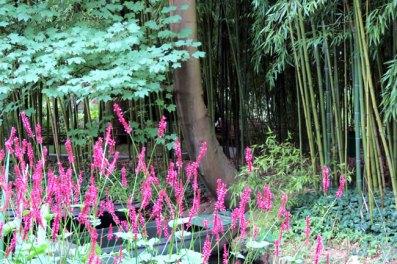 Jardim de Monet em Giverny - Foto Ffidber BBCY