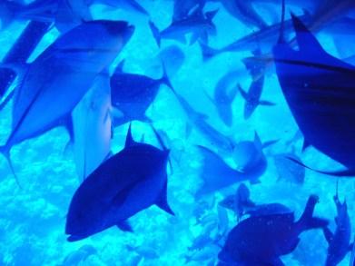 Peixes junto dos vidros do submarino, em Bora Bora