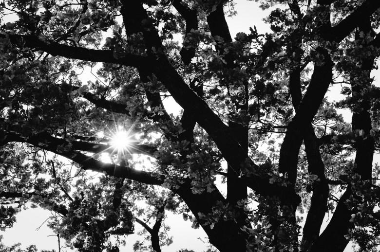 Sonnenschein hinter einem Baum