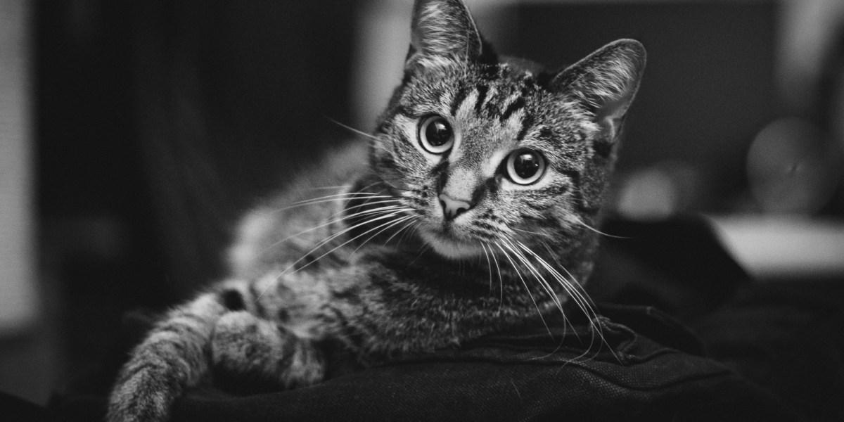 Luzi die Katze