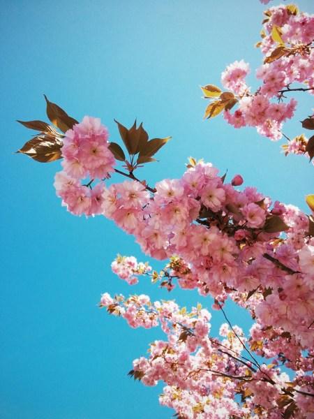 Tutzing im Frühling