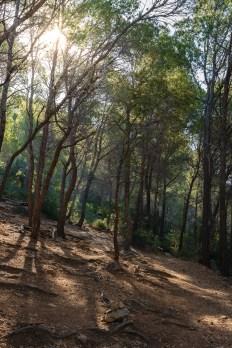 Sa Trapa, Mallorca
