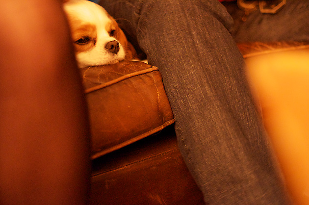 Laïla – Hund 1