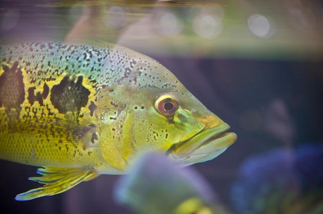 Tierfotografie – Tropischer Fisch